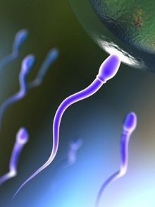 Gay Sperm, Lesbian Family Test Rights