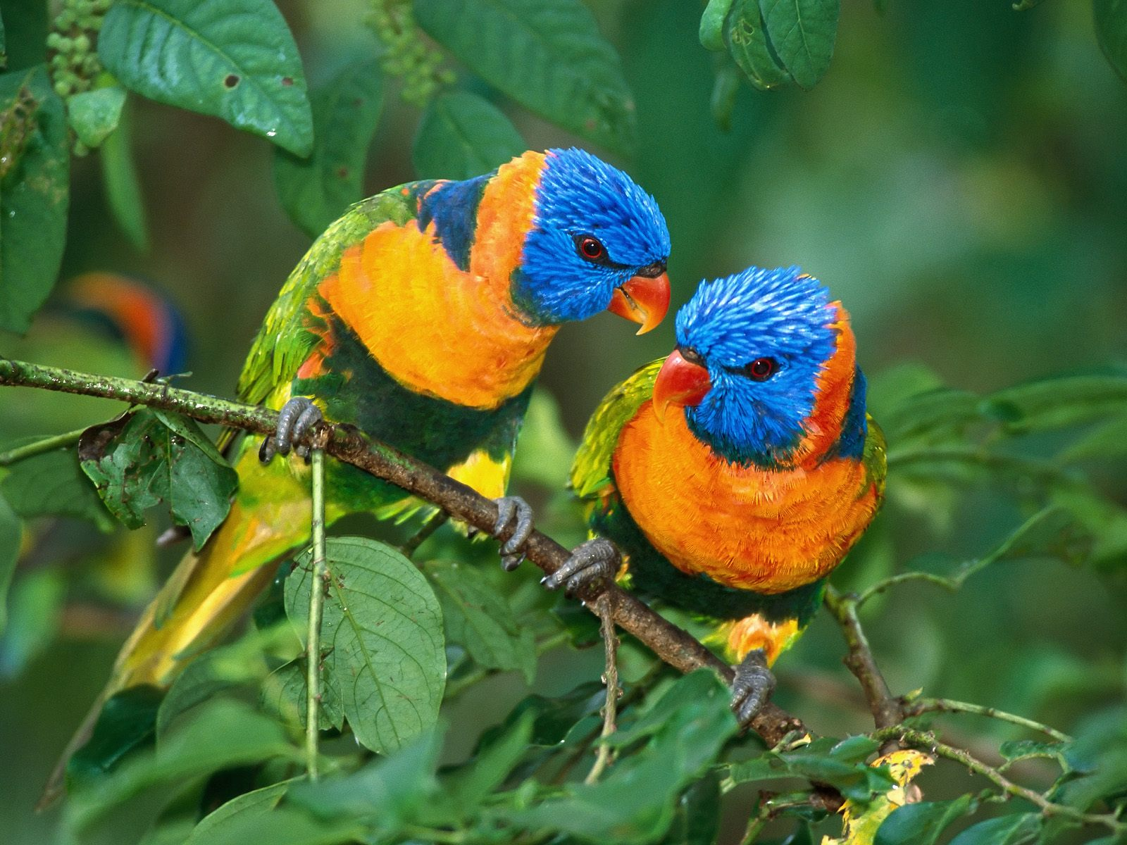 Birds Who Are Absentee Parents Are Most Likely to Go Gay