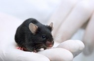 Did Scientists Really Make Those Mice Gay? Or Just Horny?