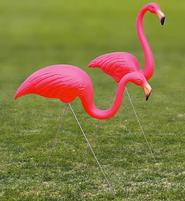 Nothing Fowl About This Pink Pair