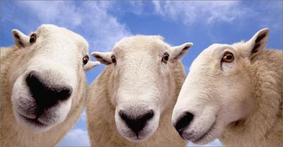 Out There: 8% Of Sheep Read Queerty