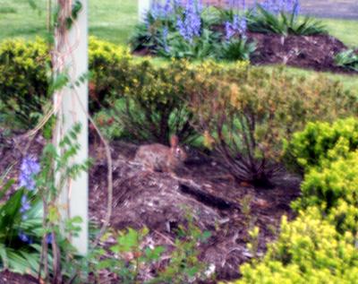 rabbit-park.jpg